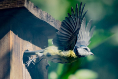pimpel-verlaat-het-nest-1